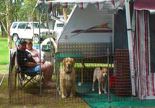 Pets - dogs in secure fencing at their caravan